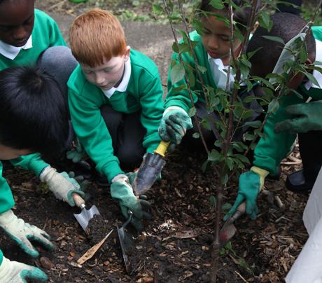Schools Growing Their Own Food Uk