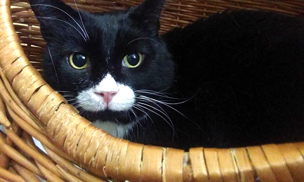 Hackney Cat Rescue