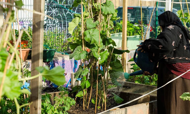 A resident waters her allotment. Photograph: Nomadic Community Gardens