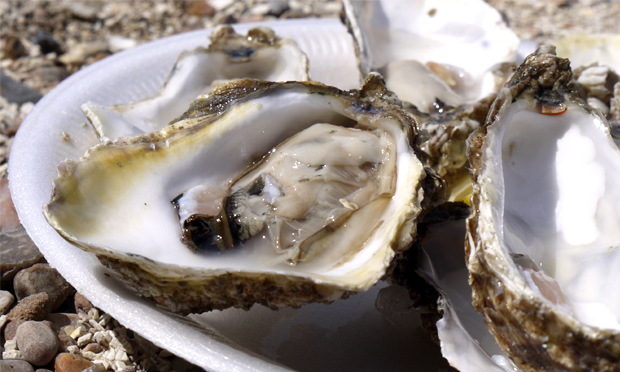 """A perfectly formed sophisticated animal"": oysters plucked from their watery home. Image: Malcolm Murdoch via Flickr"