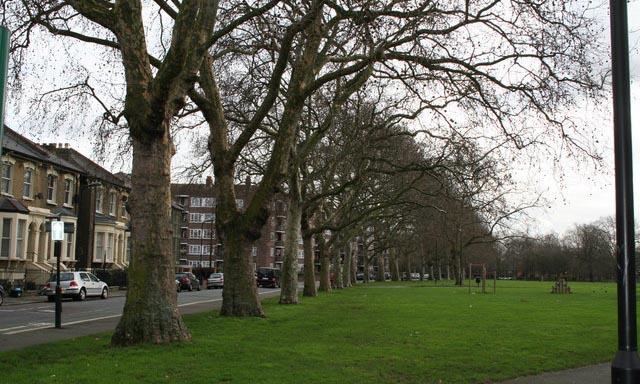 plane trees along Gascoyne Road, Well Street Common, Hackney.
