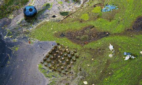 River Lea pollution