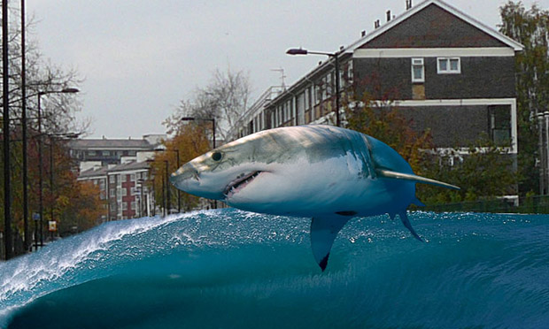A shark jumping in Wick Road. Image: Trevor ApSimon