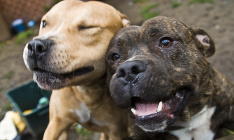 Images Of Dogs On Dangerous Dogs Act Uk