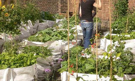 Vacant Lots Garden